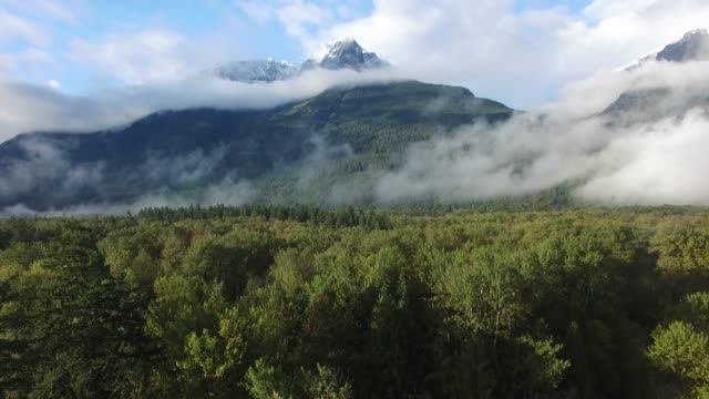 aerial: thick green forest with fog covered mountains in background - canada stock videos & royalty-free footage