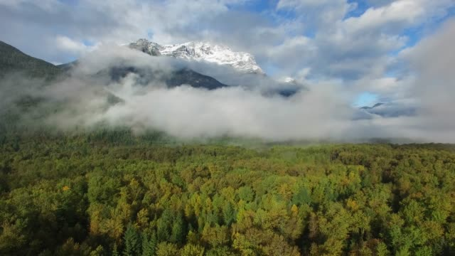 aerial: thick green forest with foggy, snow peaked mountains - thick stock videos & royalty-free footage