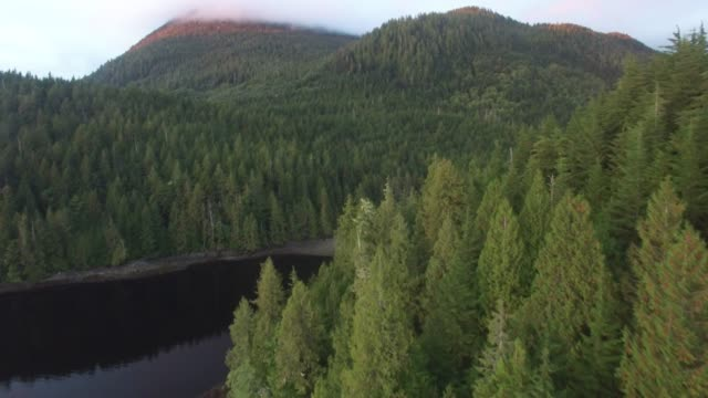 aerial: thick, green forests covering mountains by river - hill stock videos & royalty-free footage