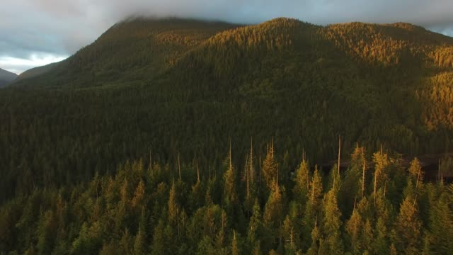 Aerial: Thick, Green Forests Covering Mountains In Evening Sun