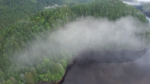 aerial: thin fog over green forest by lake during day - thick stock videos & royalty-free footage
