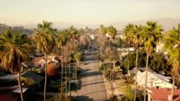 Aerial through Palm Trees in Pasadena, CA