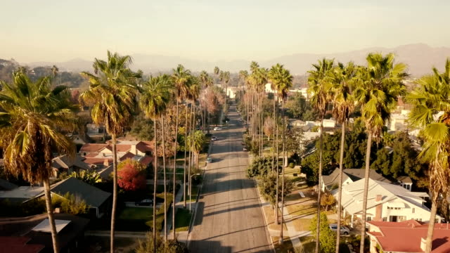 vídeos de stock e filmes b-roll de aerial through palm trees in pasadena, ca - palmeira