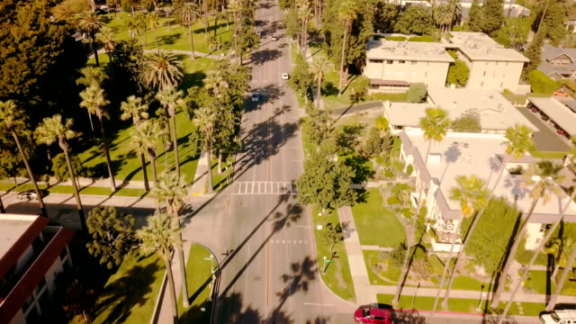 aerial through palm trees in pasadena, california - pasadena california stock videos & royalty-free footage