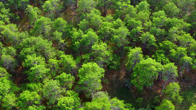 aerial tilt down shot of lush green trees in forest on sunny day, drone flying forward over natural landscape - cape cod, massachusetts - tilt down stock videos & royalty-free footage