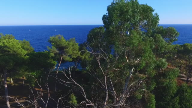 aerial tilt down shot of trees by sea against sky on sunny day, drone ascending over natural landscape - lloret de mar, spain - mar stock videos & royalty-free footage