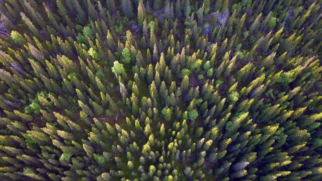 aerial top forward: green trees in forest - lapland nature reserve, russia - nature reserve stock videos & royalty-free footage