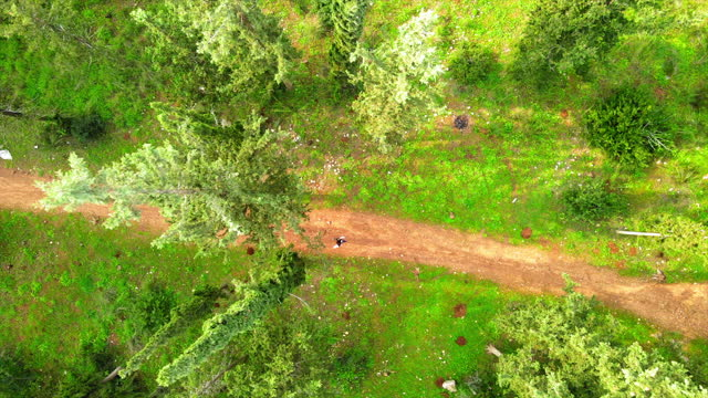 aerial top panning shot of tourist walking on pathway by trees, drone flying over famous forest - ben shemen, israel - 宅地点の映像素材/bロール