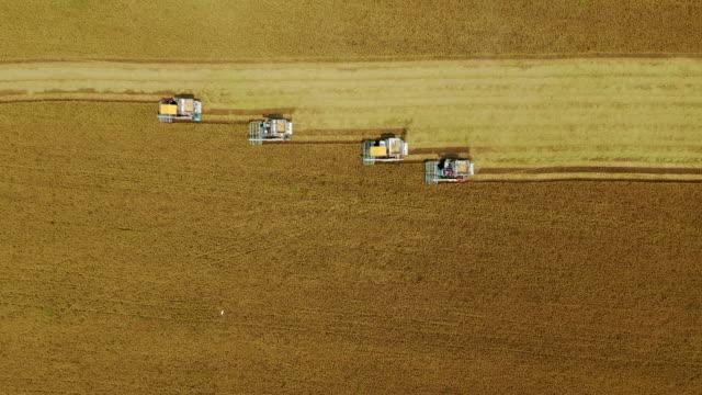 vídeos y material grabado en eventos de stock de vista superior aérea operación cosechadora combinada en el campo de arroz. - actividad de agricultura