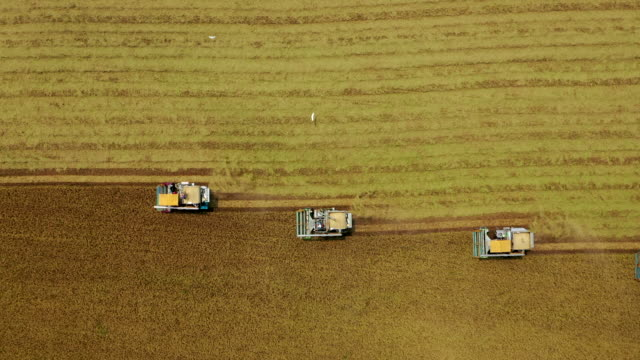 aerial top view combine harvester operation on the rice field. - tractor stock videos & royalty-free footage