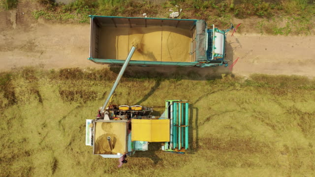 aerial top view combine harvester unloading jasmine rice to truck. - two objects stock videos & royalty-free footage