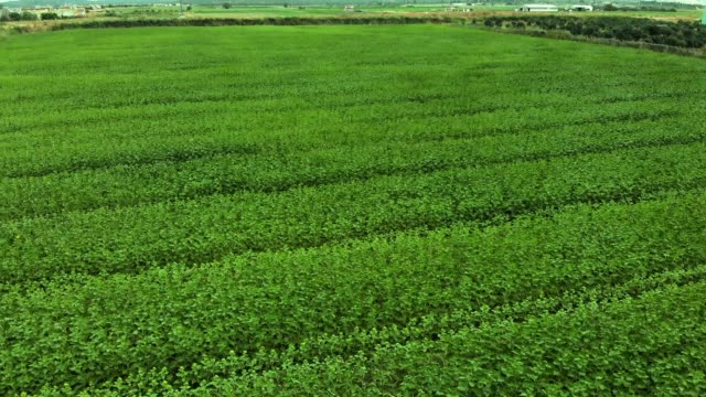 aerial top view green field - soya bean stock videos & royalty-free footage