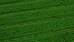 Aerial top view green field