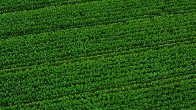 aerial top view green field - bean stock videos & royalty-free footage