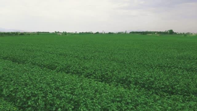 vídeos de stock, filmes e b-roll de campo verde da vista superior aérea - colher atividade agrícola
