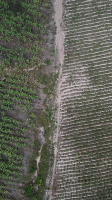 Aerial top view of agriculture farm