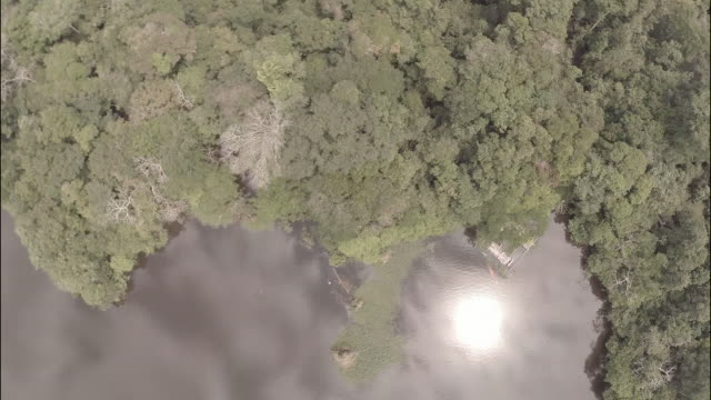 aerial top view of amazon jungle and river - amazonas state brazil stock videos and b-roll footage