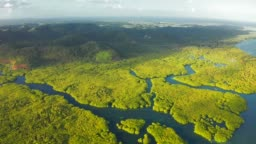 Aerial Top View of Amazon rainforest and river in Brazil