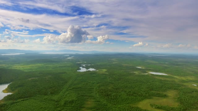 aerial top view of forest and grass - grass area stock videos and b-roll footage