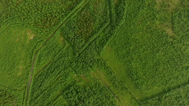 aerial top view of forest and grass - zona pedonale strada transitabile video stock e b–roll