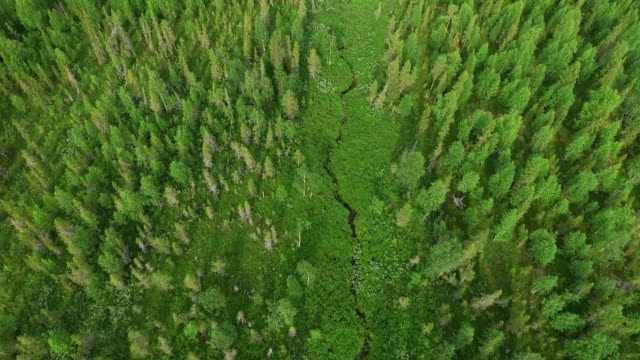 aerial top view of forest and grass - finlandia video stock e b–roll