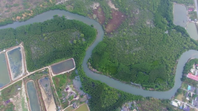 aerial top view of mangrove forest in thailand - curve stock videos & royalty-free footage