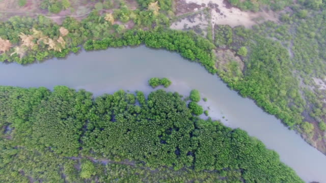 Aerial Top View of Mangrove Forest in Thailand