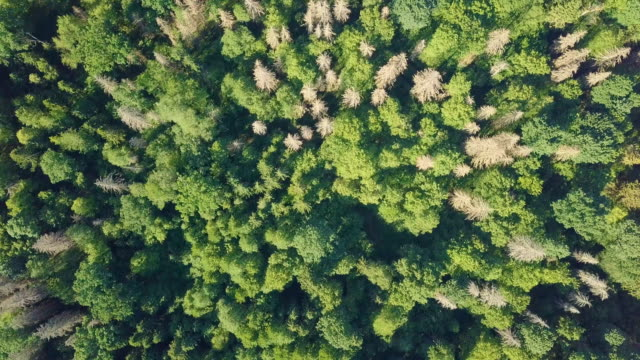 aerial top view of pristine natural forest, texture of forest view from above. - poland stock videos & royalty-free footage