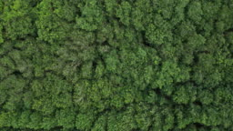 Aerial top view of rainforest and wind