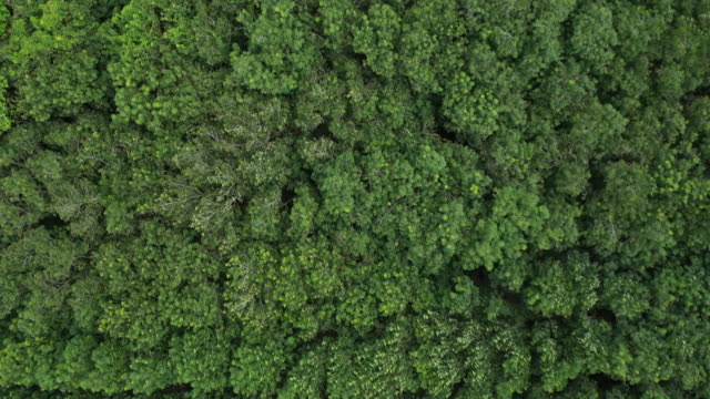 vídeos de stock e filmes b-roll de aerial top view of rainforest and wind - arvore