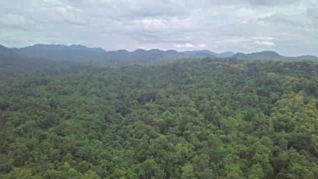 山の熱帯雨林の風景の空撮トップ - アマゾン熱帯雨林点の映像素材/bロール