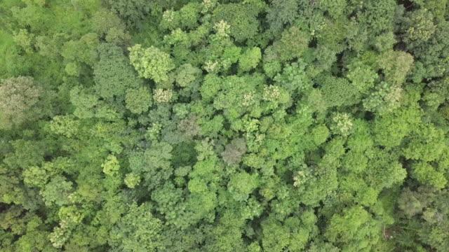 山の熱帯雨林の風景の空撮トップ - 森林点の映像素材/bロール