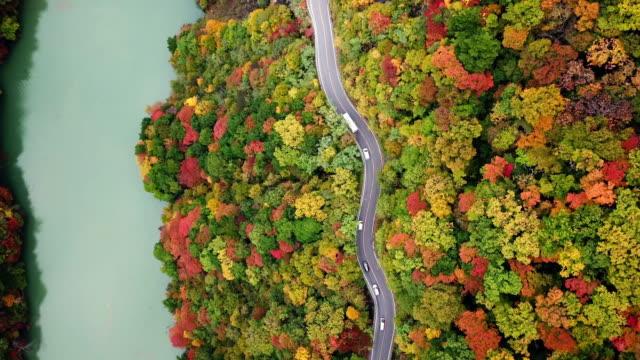aerial top view of road way with forest changed colour in autumn time near river in japan , travel concept - mountain ridge stock videos & royalty-free footage