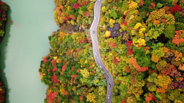 aerial top view of road way with forest changed colour in autumn time near river in japan , travel concept - ridge stock videos & royalty-free footage