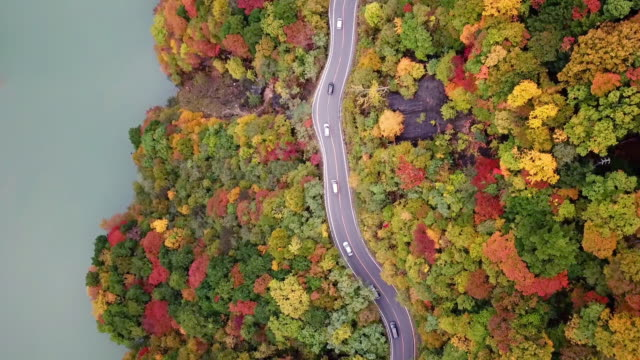 aerial top view of road way with forest changed colour in autumn time near river in japan - country road stock videos & royalty-free footage