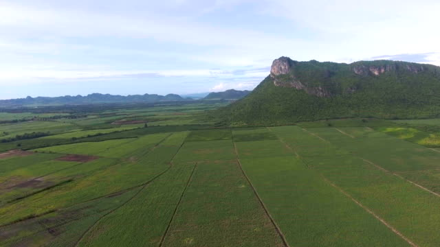vídeos y material grabado en eventos de stock de vista aérea superior de la granja orgánica de caña de azúcar con la hermosa luz del sol - multicóptero