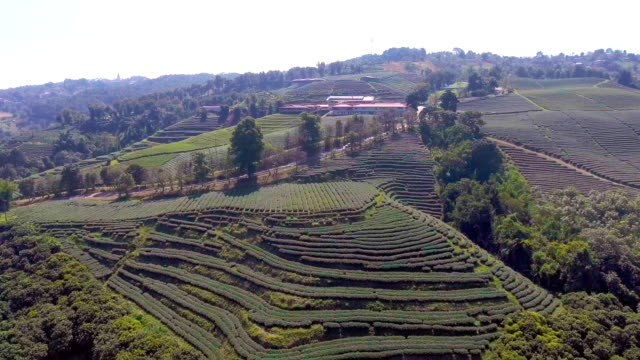 aerial top view of tea plantations, chiangmai province, thailand - caffeine molecule stock videos & royalty-free footage