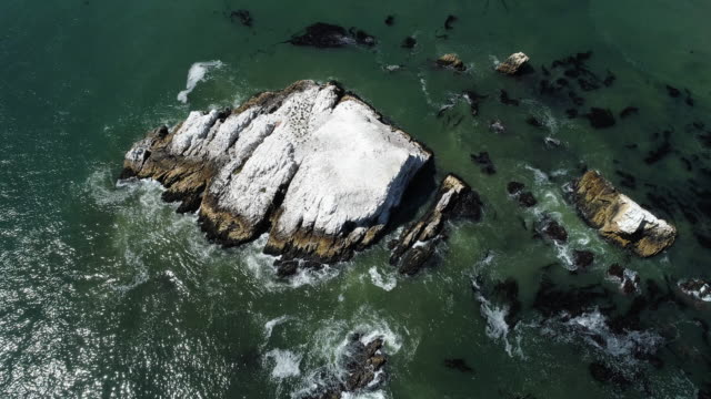 aerial top view of the rocks and driftweeds in pacific ocean, californian west coast, in the sunny spring day.  aerial drone 4k uhd video with the ascending and tilting down complex camera motion. - reef stock videos & royalty-free footage