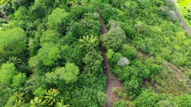 aerial top view of two people walking towards a ruin wall on a pathway among lush green tropical plants, drone flying backwards along the pathway - bora bora, french polynesia - bak och fram bildbanksvideor och videomaterial från bakom kulisserna