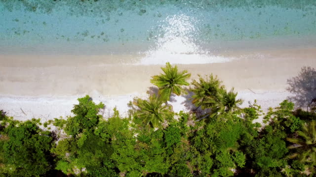 aerial top view: stunning lush green tropical beach, raja ampat islands, indonesia - indonesia video stock e b–roll
