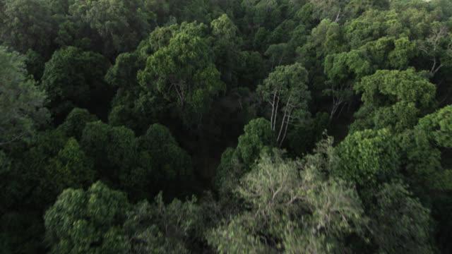 vídeos y material grabado en eventos de stock de aerial track and tilt up over woodland savannah, kenya - boscaje