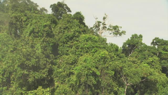 """vídeos y material grabado en eventos de stock de aerial track around forested peak. - """"bbc natural history"""""""