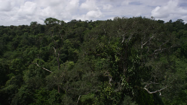 aerial track around trees, cambodia. - tree canopy stock videos & royalty-free footage