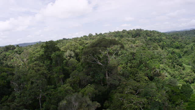 """aerial track around trees, cambodia. - """"bbc natural history"""" stock videos & royalty-free footage"""