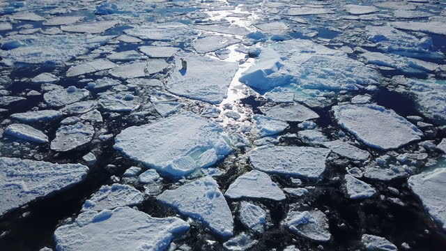 ws aerial track behind polar bear walking between ice floes - 30 seconds or greater stock videos & royalty-free footage