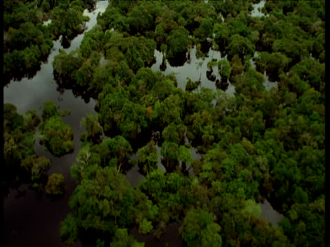 Aerial track down over flooded Amazon forest.