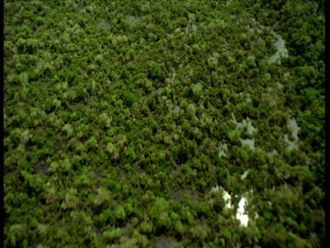 Aerial track down over flooded Amazon jungle.