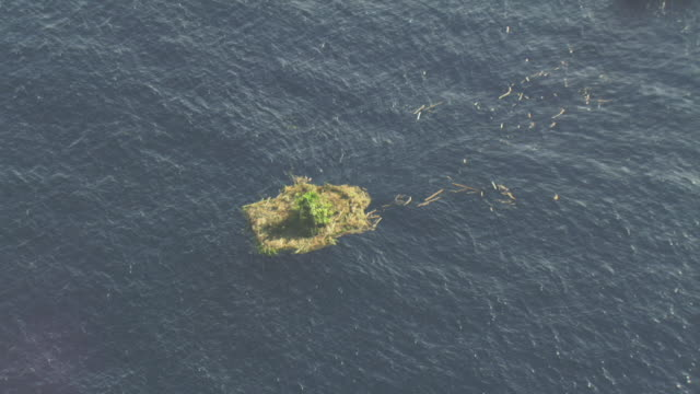 vidéos et rushes de aerial track over and around raft of floating vegetation. - océan pacifique sud