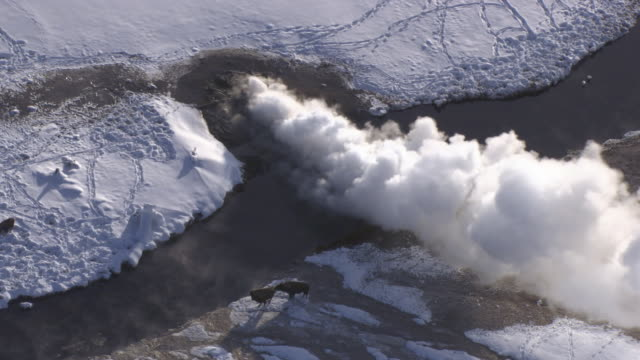 Aerial track over bison (Bison bison) and erupting geyser in winter, Yellowstone, USA