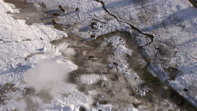 aerial track over bison (bison bison) and hot springs in winter, yellowstone, usa - american bison stock videos & royalty-free footage